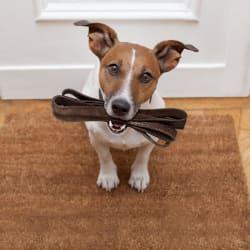 Dog ready for a walk at Avilla Paseo in Phoenix, Arizona