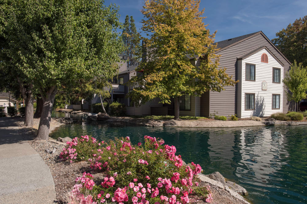 Beautiful landscaping with large pink flowers at Hidden Lake Condominium Rentals in Sacramento, California