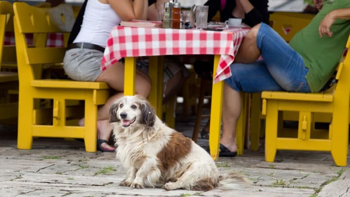 Dog sitting by restaurant table at Anatole on Briarwood in Midland, Texas
